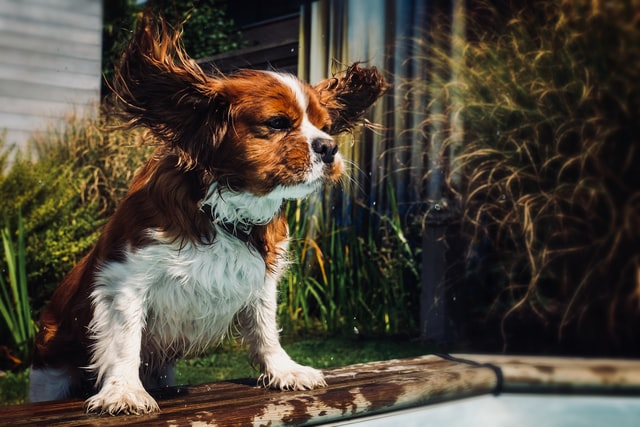 Puppy Jumping – Tips to Stop Your Puppy Jumping on People!