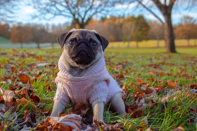 Teaching Puppy To Sit – Is it possible within Minutes?